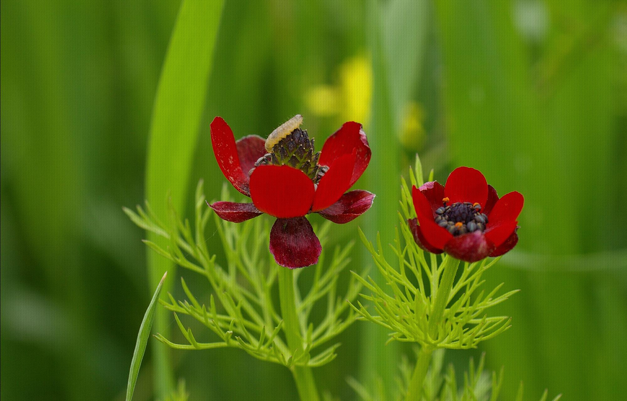 Gîte Évolutions nature sauvage faune flore